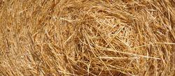 Baux ruraux: hausse du montant des fermages